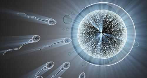 中出し受精