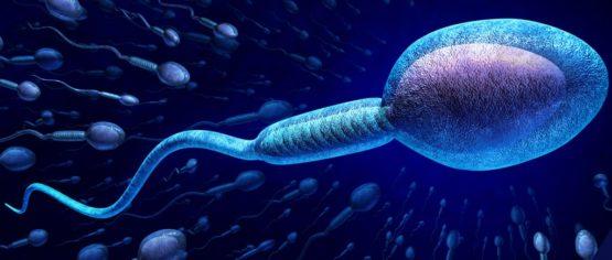 薄くなった精子